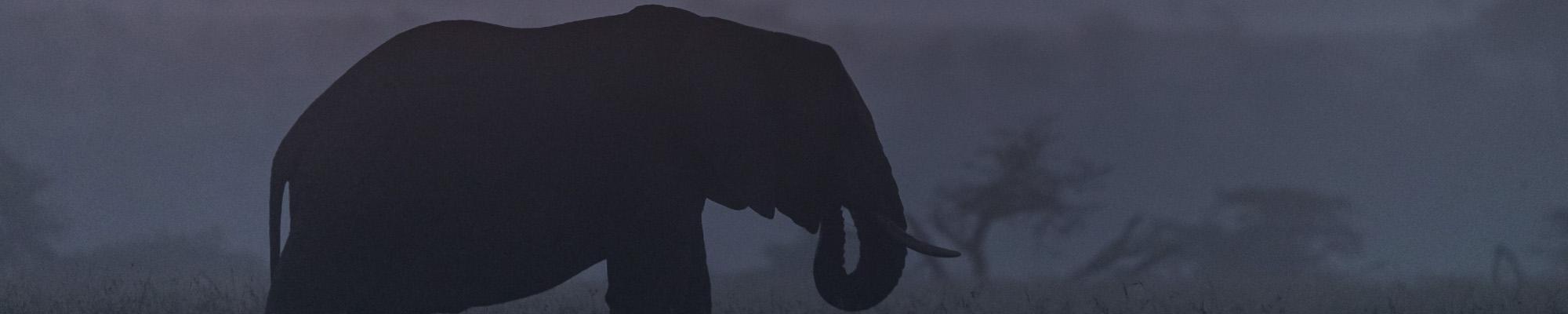 "Simon Van-Orden: ""Images from Africa"""