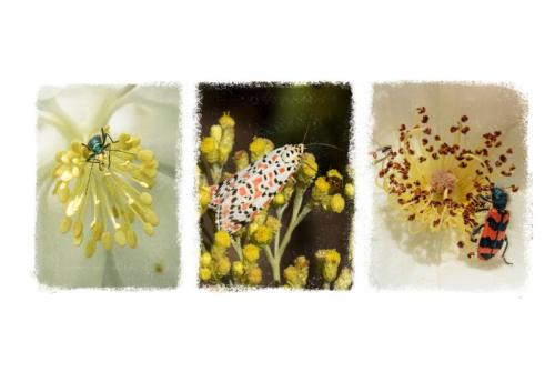Penny Westmoreland - Insects on Flowers