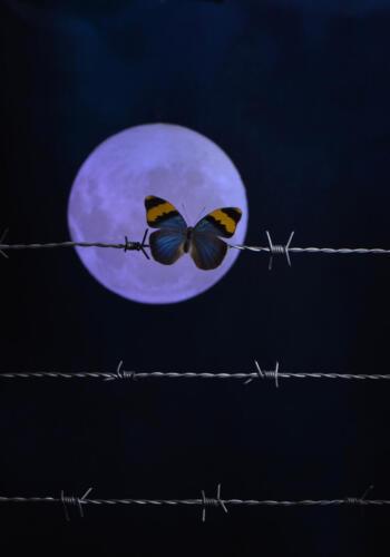 Rick Goldstein - Papillion