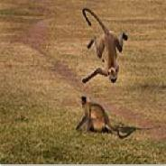 Rosie Littlemore - Monkey tumbles